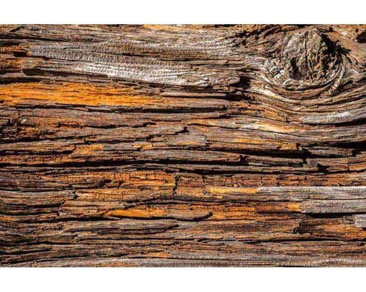 DIMEX | XL-541 Vliesové fototapety na zeď Kůra stromu | 330 x 220 cm | béžová, hnědá