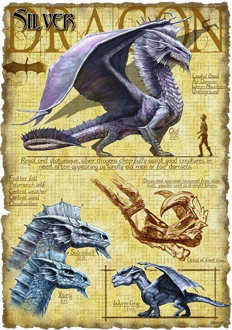 Silver Dragon by Richard Sardinha
