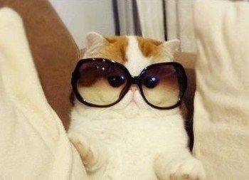 chat à lunettes! looooool!