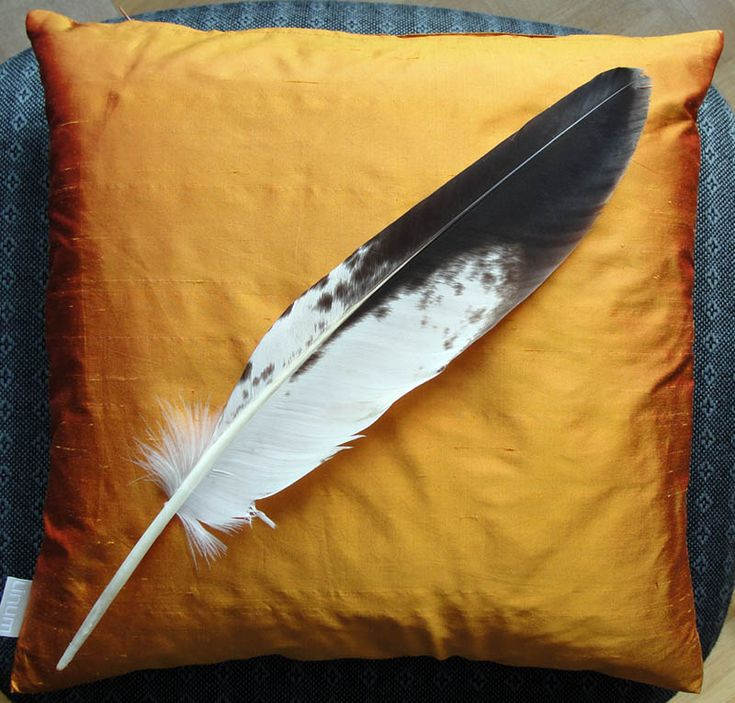 young golden eagle feather