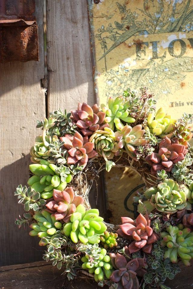 Beautiful succulent wreath!