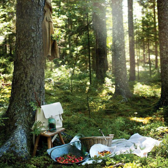 Wellness Hotspot - Forest bathing, Japanese cornerstone of preventative health care