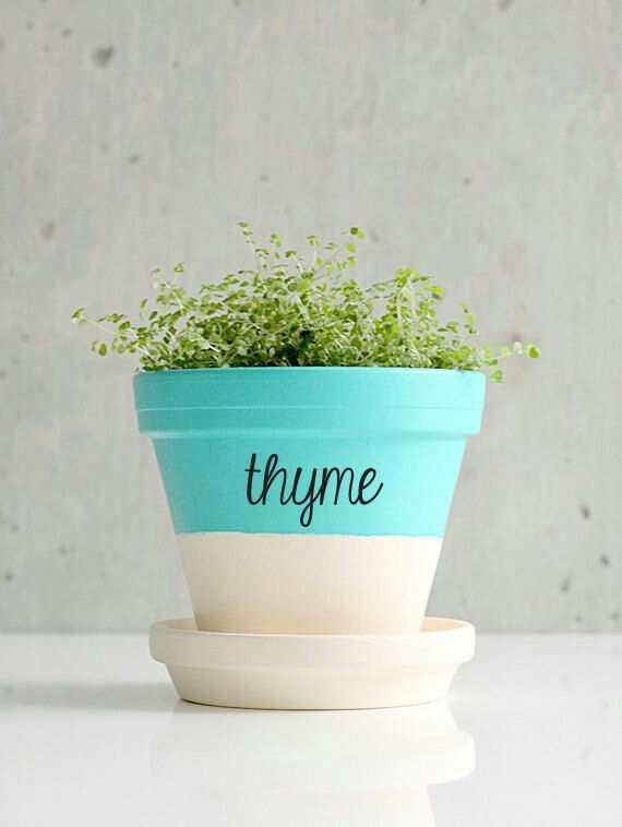 Amo le piante 👑🌱🌿🌹