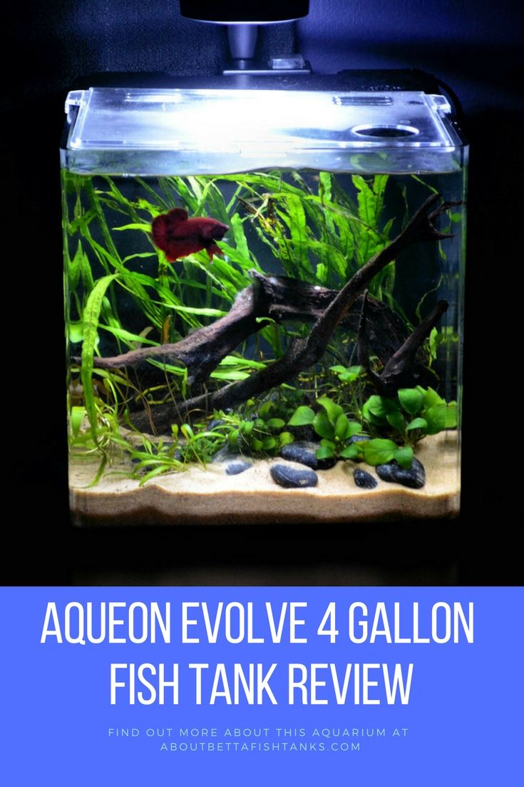 139 best betta fish tanks images on pinterest aquariums for 20 gallon fish tank size