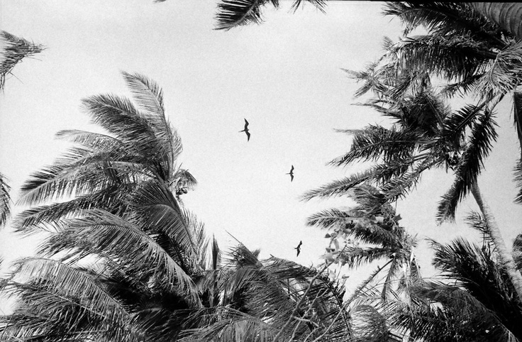 !: Blackandwhit Birds, White Photography, Vans Of, Zaag Photographers, Der Zaag, Photographers Landscape, Contemporary Photography, Zaag Pictures, Thomas Vans