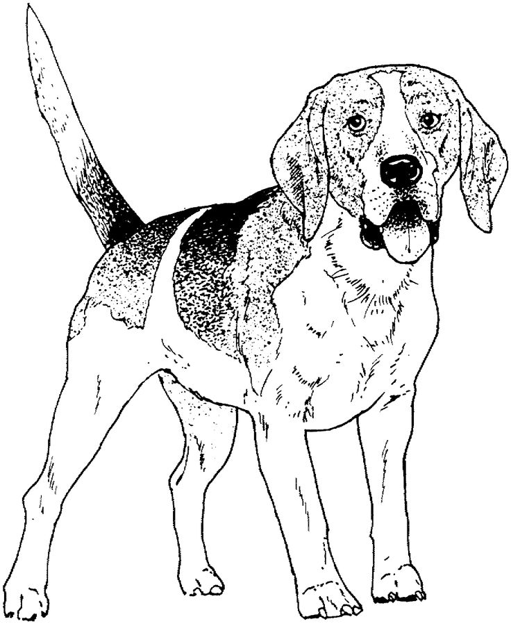 dog color pages printable dog breed coloring pages