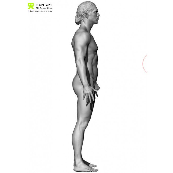 The 87 best 3d scan images on Pinterest | Anatomy reference, Anatomy ...