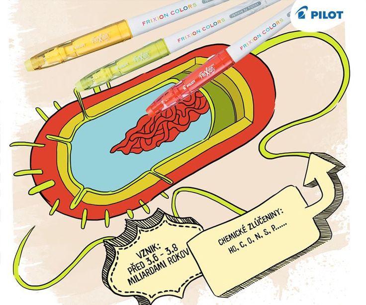 Z čoho sa skladá bunka? Ako vznikol život? Pozrite na nás nový sketchnote :)