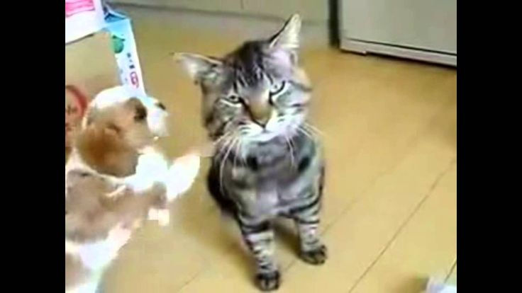 Funny puppies and kittens. Funny animals   Забавные щенки и котята. Смеш...