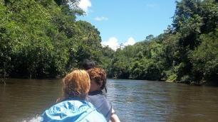 Borneo Orangutan Protection | Global Volunteer Services / Work | Study Abroad Volunteer Programs