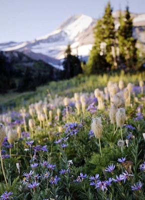 meadow in front of a mountain