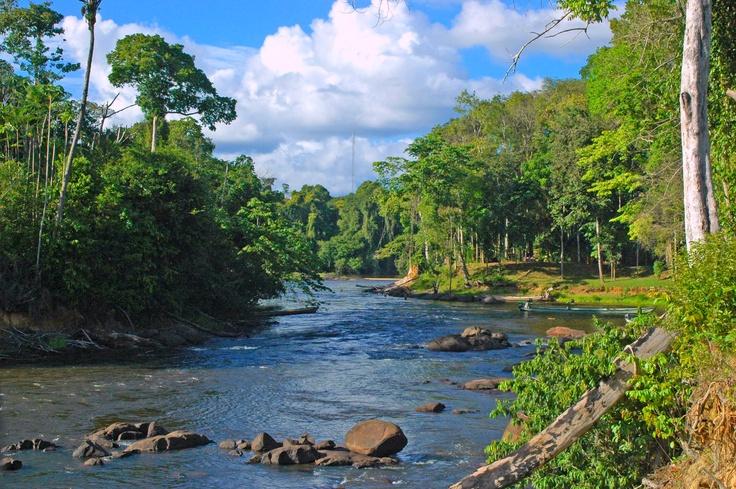 Suriname 100% natuur. Bekijk de mooiste natuurreizen naar Suriname op http://www.naturescanner.nl/zuid-amerika/suriname