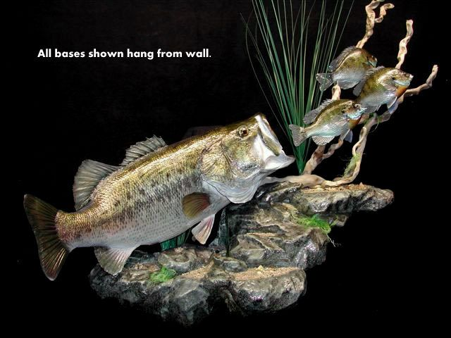 2. LARGEMOUTH BASS SKIN MOUNT W/ BLUEGILL ON MULTI-LEVEL ROCK BASE FOR WALL