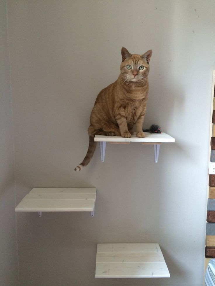homemade cat shelves