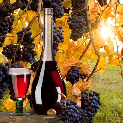 Rotwein im Herbst von der Sonne effektvoll in Szene gesetzt