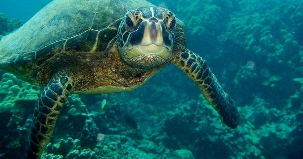 Reptile skin grown in lab could help save endangered turtles http://www.treehugger.com/endangered-species/reptile-skin-grown-lab-could-help-save-endangered-turtles.html
