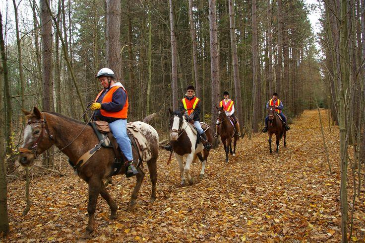 Regional Forest Tract - Horseback riding