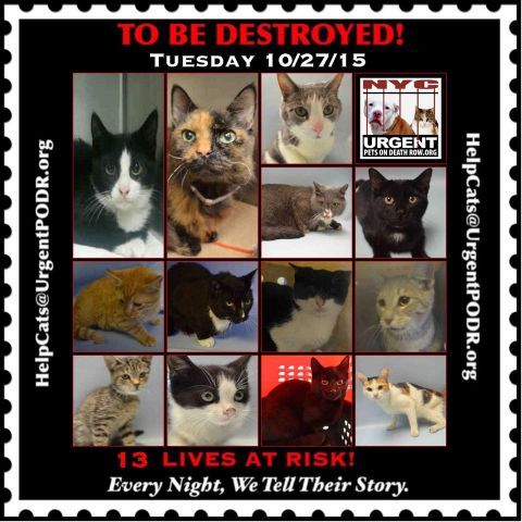 TO BE DESTROYED  10/27/15   TO BE DESTROYED  http://nyccats.urgentpodr.org/montage-071215/
