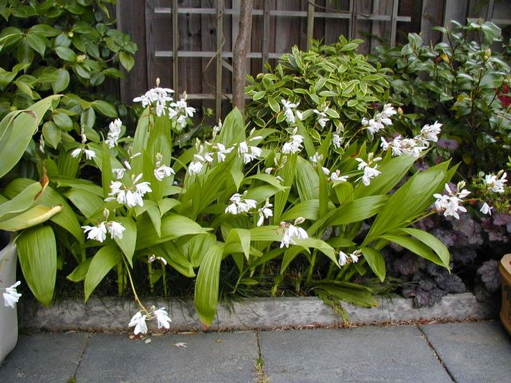 Why not grow orchids? - TROPICAL LOOKING PLANTS - Other Than Palms ...