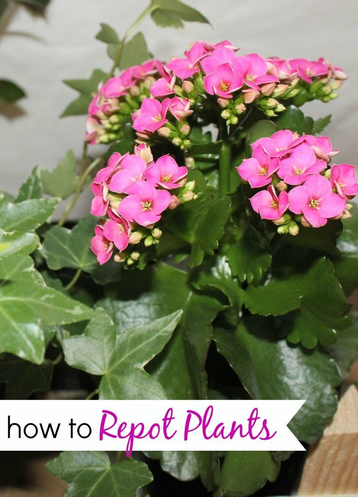 How to Repot Plants & Make a