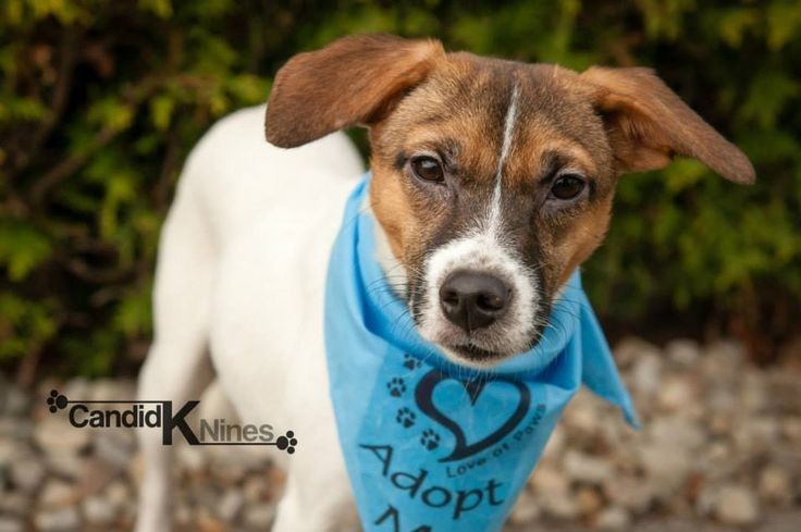 Mindy - For the Love of Paws Animal Rescue
