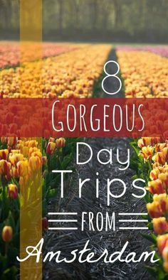 8 Gorgeous Day Trips from Amsterdam: flowers, windmills, gouda, architecture... so many to choose from!