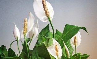 Dit zijn de meest luchtzuiverende planten voor in huis