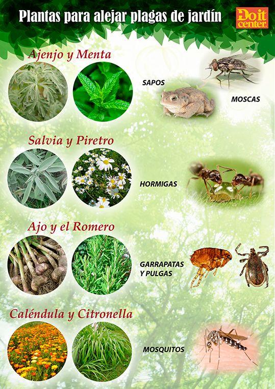 8 plantas que actúan como repelentes naturales de plagas. #jardin #plantas  #plagas