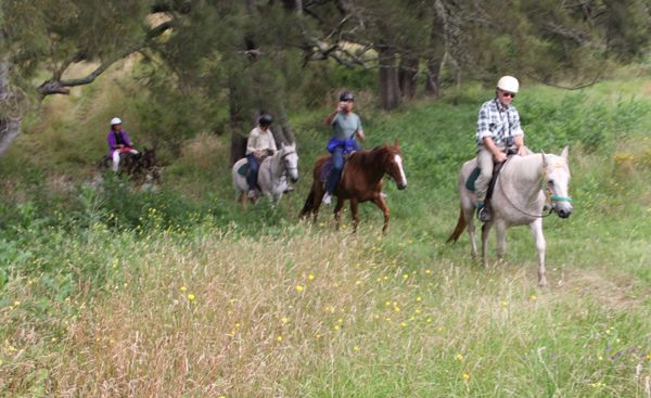 Go Horse Riding in the Megalong Valley on a Tour from Sydney, with the Blue Mountains Equestrian Centre
