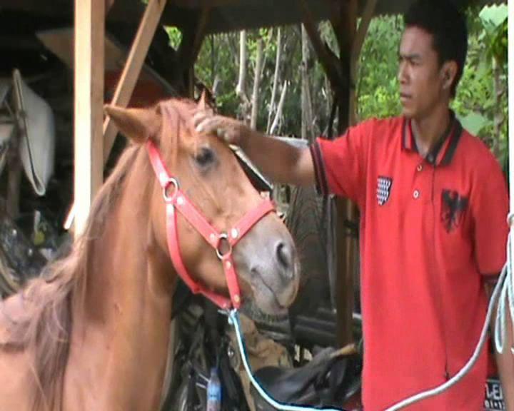 Jasa Perawatan dan Pelatihan Kuda, Jadikan Kuda Pacuan Berharga Selangit