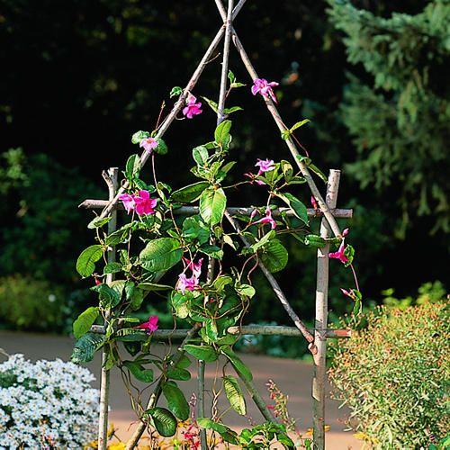 84 Best Trellis Images On Pinterest Flowers Garden 400 x 300