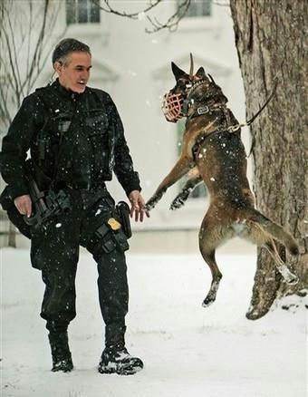 Tuesday, Jan. 27, 2009 A Uniform Secret Service Emergency Response Team officer watches his security dog play in the light snow that covered the White House grounds in Washington