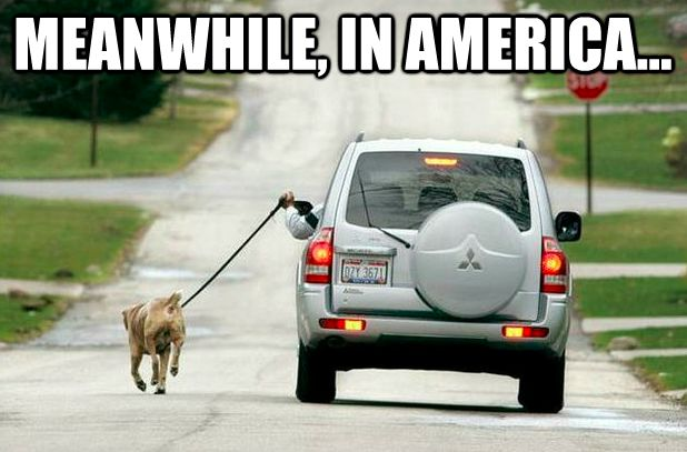 "50 Funniest ""Meanwhile, in America"" Meme Pics & Gifs"