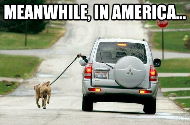 "50 Funniest ""Meanwhile, in America"" Meme Pics & Gifs"