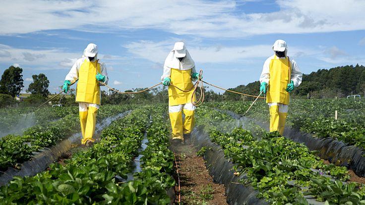 """""""Certains rejoindraient même Déphy dans le but de passer progressivement mais définitivement à une agriculture biologique. Une révolution est en marche et on n'a qu'une seule envie : la saluer et l'encourager !""""... http://positivr.fr/dephy-pesticides-reduire-moitie-2025-agriculteurs/?"""