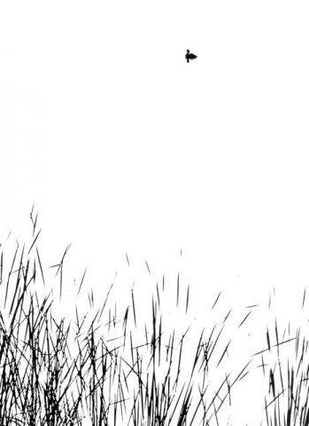 Aart KLEIN :: Vijver met eend, 1969