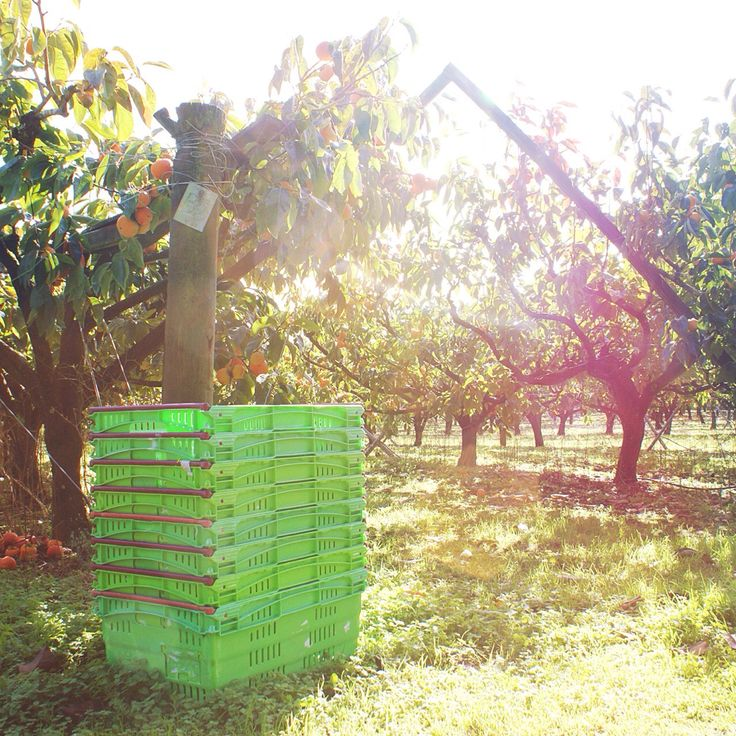 The Bay of Islands is blessed with a climate that makes it a wonderful area for growing produce. Kerikeri fruit is well-known in NZ for being delicious!