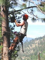 A Tree Trimming Service is armed with the right equipments and strategies to carry out an effective tree trimming process. Stump Grinding service providers are capable enough to remove the most difficult stump structures. Owing to these utilities, tree care services are gaining huge scale acceptance.