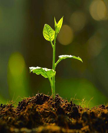 Life via soil
