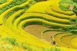 http://www.squidoo.com/vietnam-travel5