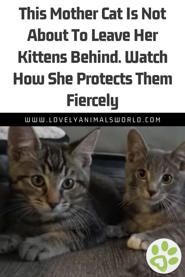 This Mother Cat Is Not About To Leave Her Kittens Behind. Watch How She Protects Them Fiercely