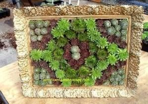 Succulent Frame by maria.t.rogers
