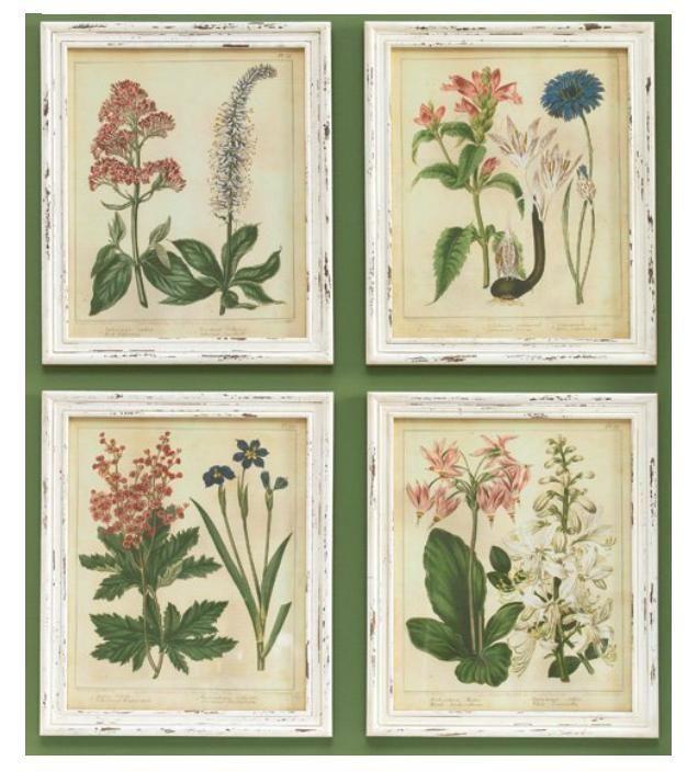 shabby cottage chic framed botanical printsset of 4 raz imports