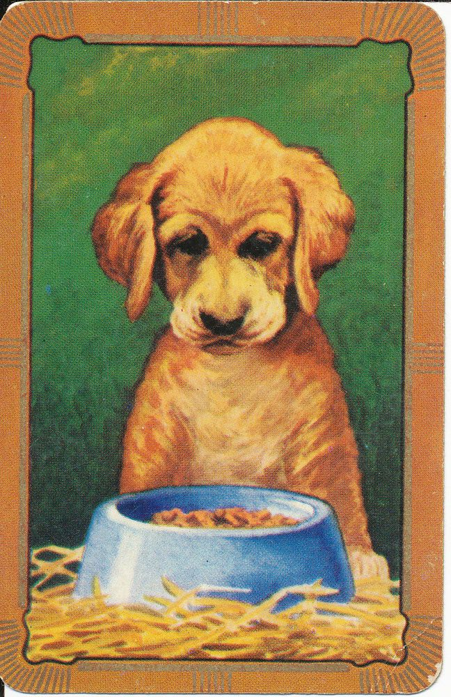 1 X VINTAGE COLES SWAP PLAYING  CARD - DOG LOOKING IN BOWL