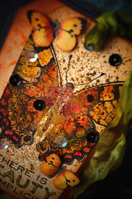 Butterfly Bright Coloration 11