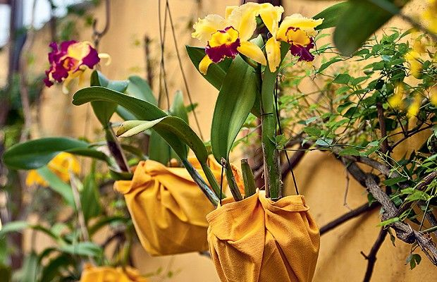 Orquídeas: 10 erros que você comete com as suas