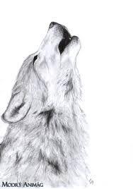 Výsledok vyhľadávania obrázkov pre dopyt kresleny vlk