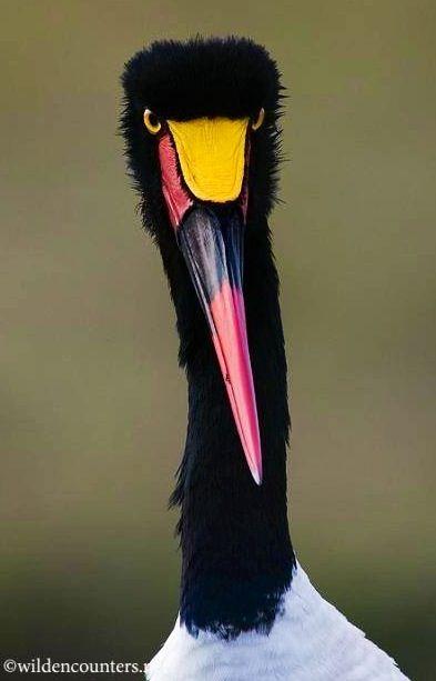 Stork via Paradise of Birds on Facebook