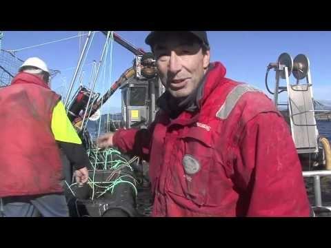 Meet Peter Bender and his #Tasmanian #Salmon from #Huon Aquaculture: www.AussieFarmers.com.au/MeetOurFarmers #AussieFarmers #Fishing #Seafood