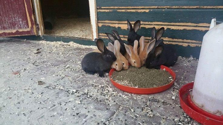 Zomer 2015: er zijn jonge konijntjes gekomen, lief hè...